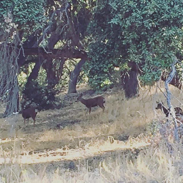 Had to slow my roll a little and take in part of what gets me out on the trail. Three of the 6 from the herd of deer I spotted as I was bombing past. Always cool to see these guys on trail.